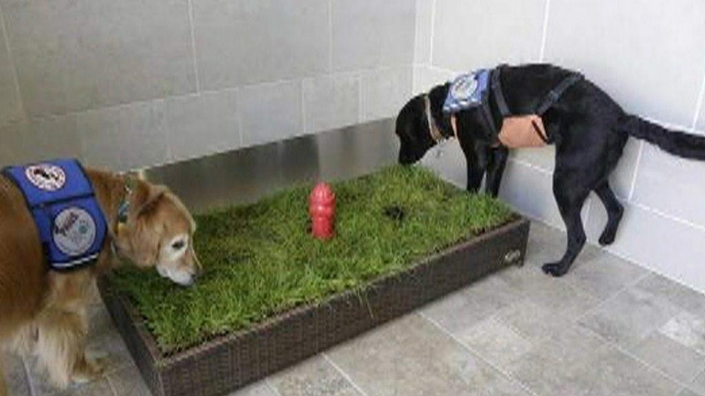 sanitarios-para-peludos-baos-para-mascotas-